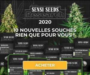 Toutes les graines Sensi Seeds