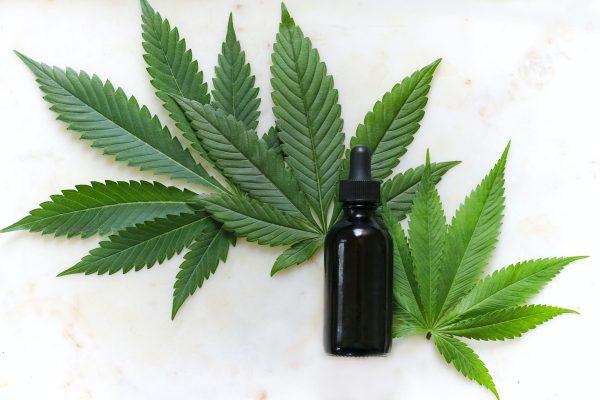 feuilles cannabis
